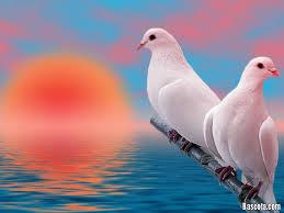 طيور1