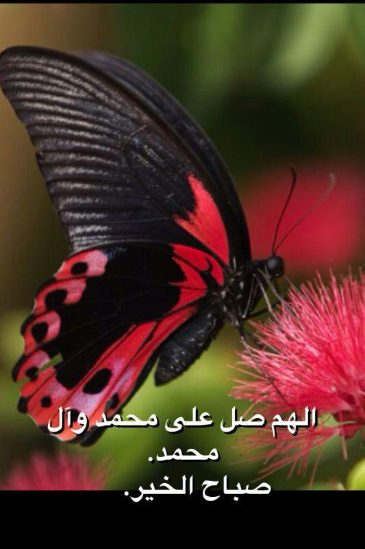 IMG-20130618-WA0033