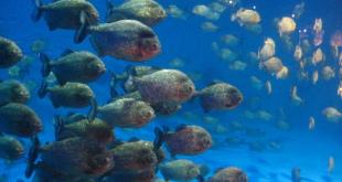 أكواريوم عالم ما تحت البحار كوالالمبور ماليزيا 8