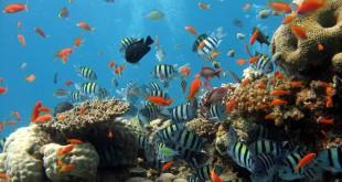 Animals_Under_water_sea_ocean_fish_024355_
