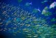Moofushi_Kandu_fish
