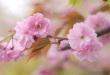 http://regex.info/blog/2008-04-15/792
