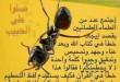 IMG_2637